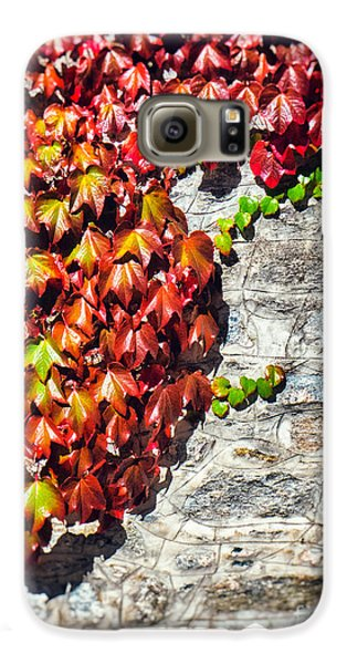 Galaxy S6 Case featuring the photograph Red Ivy On Wall by Silvia Ganora