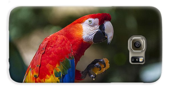 Macaw Galaxy S6 Case - Red Parrot  by Garry Gay