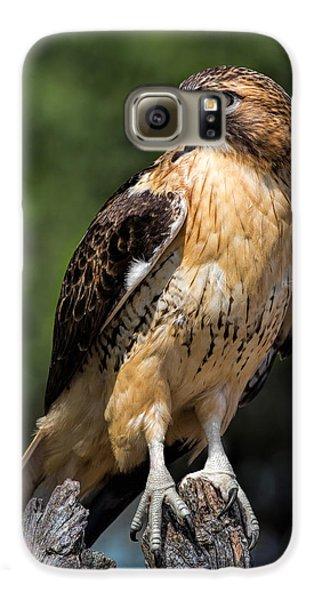 Red Tail Hawk Portrait Galaxy S6 Case