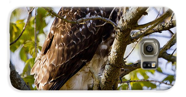 Galaxy S6 Case featuring the photograph Red Tailed-hawk by Ricky L Jones
