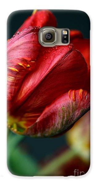 Tulip Galaxy S6 Case - Red Tulip With Dew by Nailia Schwarz