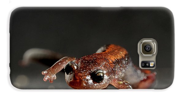 Redback Salamander Plethodon Cinereus Galaxy S6 Case