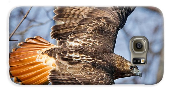 Redtail Hawk Square Galaxy S6 Case by Bill Wakeley