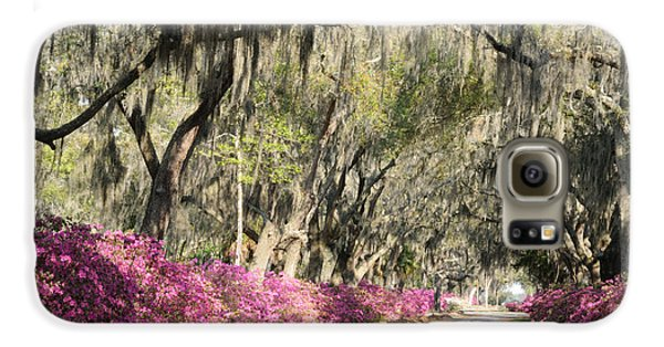 Road With Azaleas And Live Oaks Galaxy S6 Case