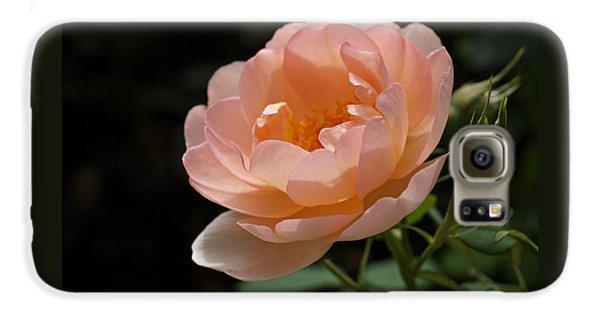 Rose Blush Galaxy S6 Case by Rona Black