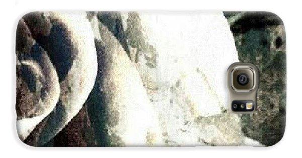 Decorative Galaxy S6 Case - Rose In Retro by Jacqueline Schreiber