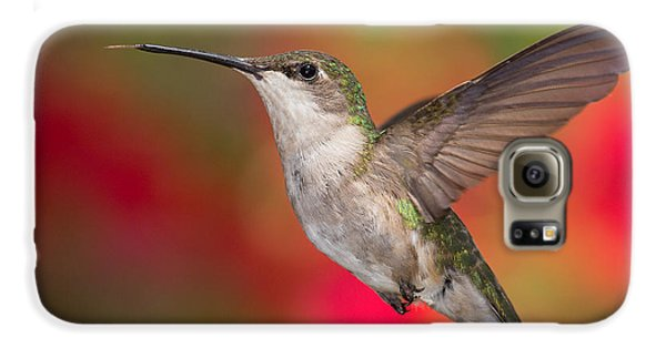 Ruby Throated Hummingbird Galaxy S6 Case