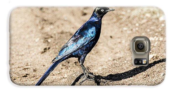 Ruppell's Glossy-starling Galaxy S6 Case by Photostock-israel