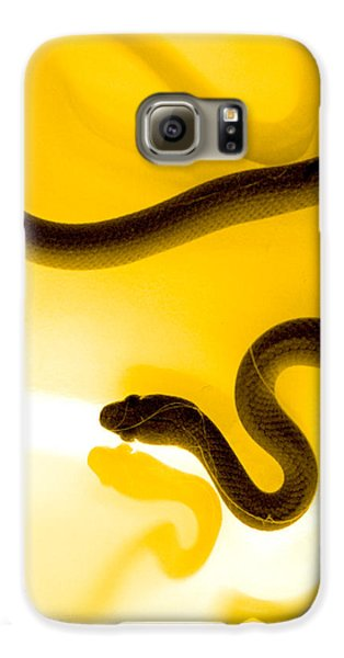 Reptiles Galaxy S6 Case - S by Holly Kempe