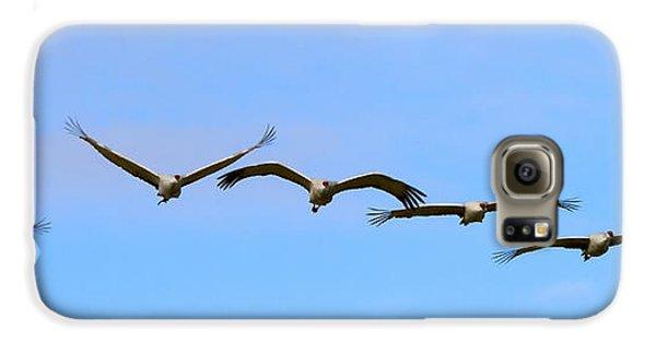 Sandhill Crane Flight Pattern Galaxy S6 Case by Mike Dawson