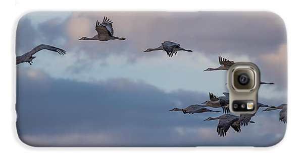 Sandhill Cranes Galaxy S6 Case by Beverly Parks