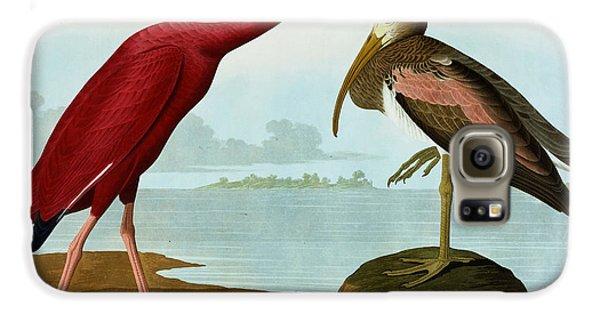 Scarlet Ibis Galaxy S6 Case