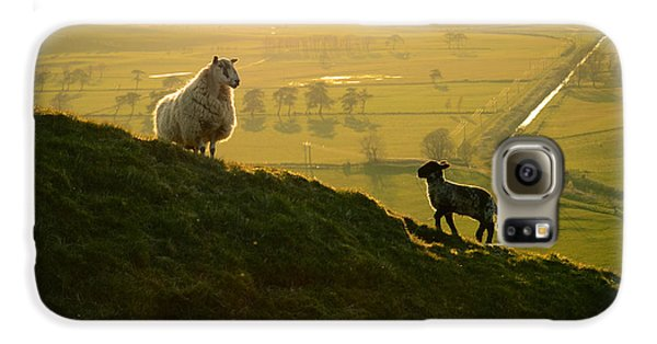 Scottish Sheep And Lamb Galaxy S6 Case by Mr Doomits