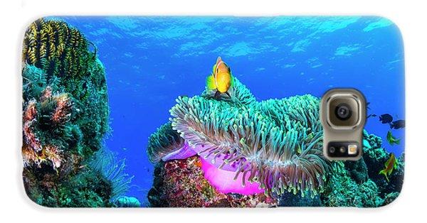Colours Galaxy S6 Case - Sea Life by Roberto Marchegiani