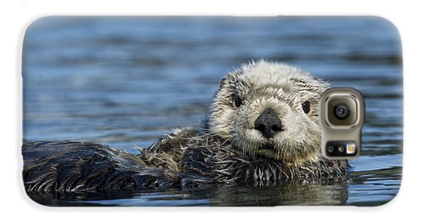 Sea Otter Alaska Galaxy S6 Case by Michael Quinton