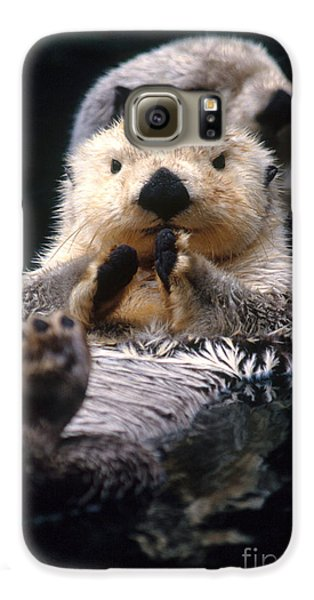 Sea Otter Pup Galaxy S6 Case by Mark Newman
