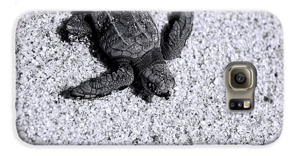 Sea Turtle In Black And White Galaxy S6 Case by Sebastian Musial