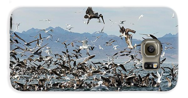 Boobies Galaxy S6 Case - Seabirds Feeding by Christopher Swann