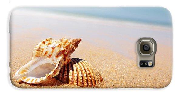 Beach Galaxy S6 Case - Seashell And Conch by Carlos Caetano