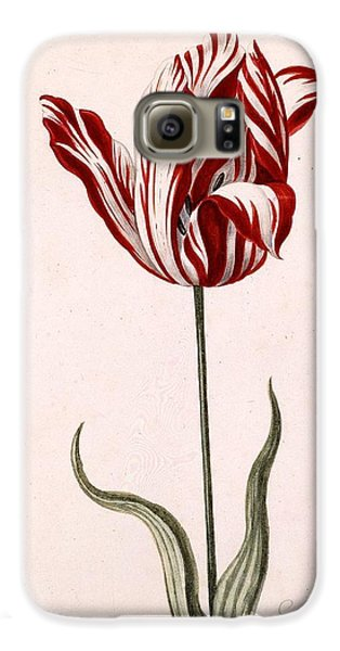 Tulip Galaxy S6 Case - Semper Augustus by Celestial Images