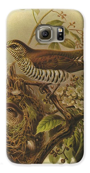 Cuckoo Galaxy S6 Case - Shining Cuckoo by Dreyer Wildlife Print Collections