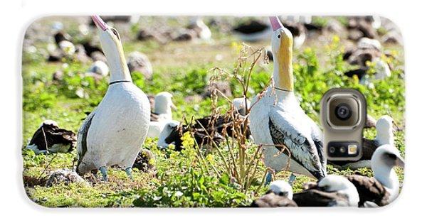 Short-tailed Albatross (phoebastria Galaxy S6 Case by Daisy Gilardini