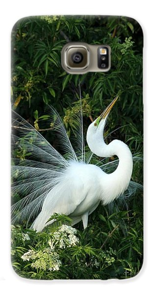Showy Great White Egret Galaxy S6 Case