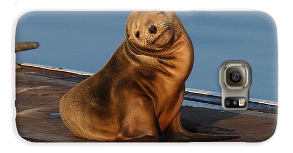 Shy Sea Lion Pup  Galaxy S6 Case
