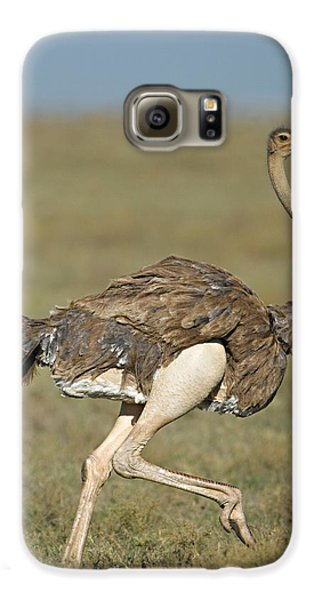 Side Profile Of An Ostrich Running Galaxy S6 Case