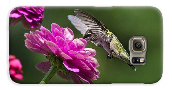 Simple Pleasure Hummingbird Delight Galaxy S6 Case