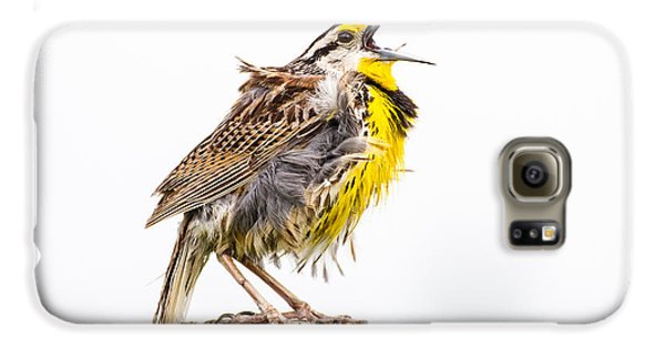 Singing Meadowlark 3rd Of 3 Galaxy S6 Case by Bill Swindaman