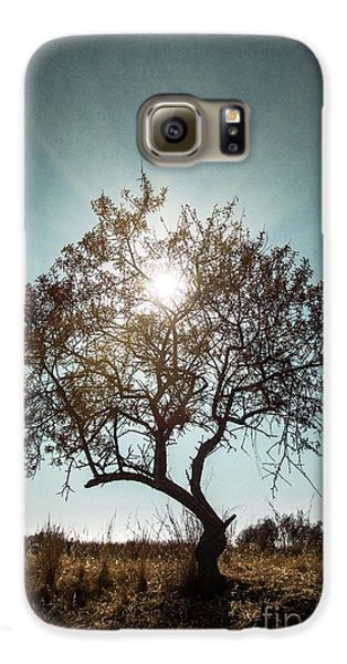 Single Tree Galaxy S6 Case