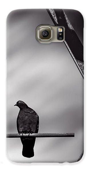 Pigeon Galaxy S6 Case - Sitting On A Stick by Bob Orsillo