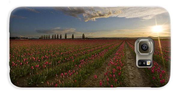 Skagit Tulip Fields Sunset Galaxy S6 Case by Mike Reid