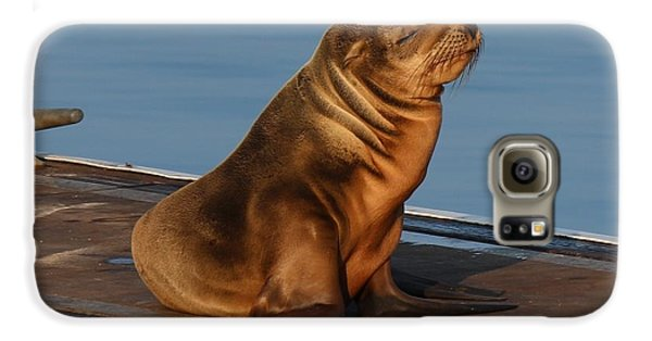 Sleeping Wild Sea Lion Pup  Galaxy S6 Case