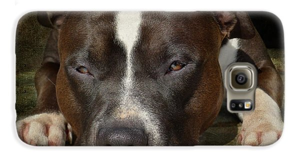 Bull Galaxy S6 Case - Sleepy Pit Bull by Larry Marshall