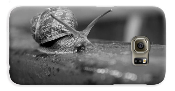 Galaxy S6 Case featuring the photograph Snail by Lora Lee Chapman