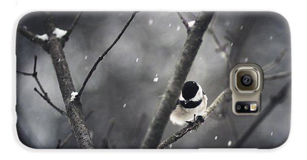Chickadee Galaxy S6 Case - Snowy Chickadee by Shane Holsclaw