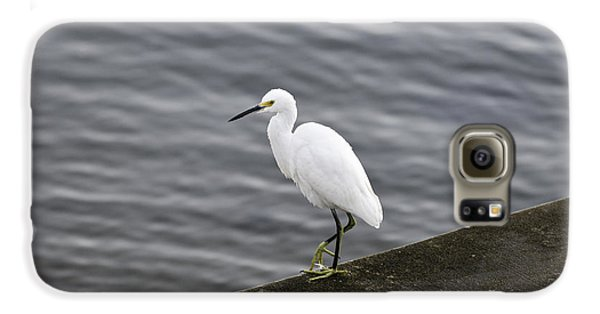 Galaxy S6 Case featuring the photograph Snowy Egret by Anthony Baatz