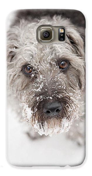Dog Galaxy S6 Case - Snowy Faced Pup by Natalie Kinnear