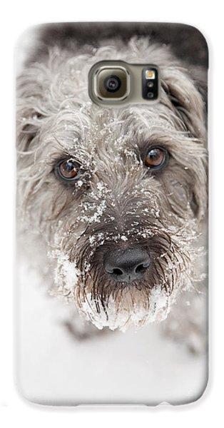 Snowy Faced Pup Galaxy S6 Case