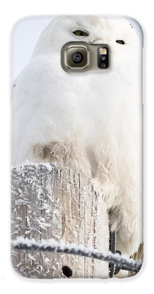 Snowy Owl Galaxy S6 Case