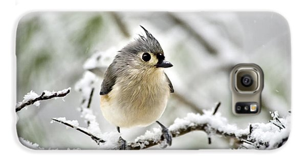 Snowy Tufted Titmouse Galaxy S6 Case