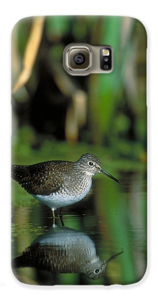 Solitary Sandpiper Galaxy S6 Case