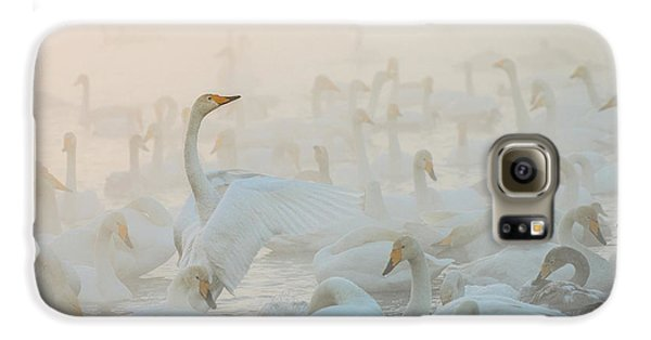 Swan Galaxy S6 Case - Song Of The Morning Light by Dmitry Dubikovskiy
