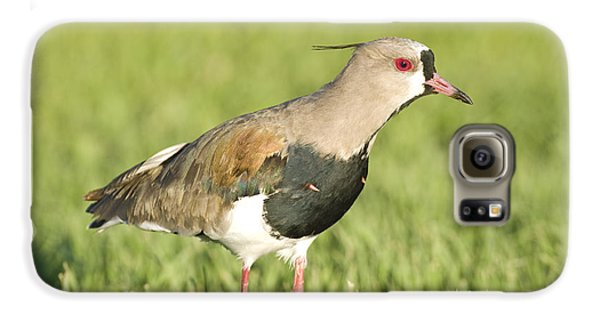 Lapwing Galaxy S6 Case - Southern Lapwing by William H. Mullins