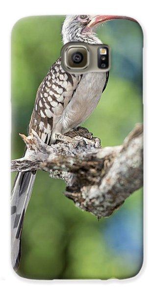 Hornbill Galaxy S6 Case - Southern Red-billed Hornbill by Tony Camacho