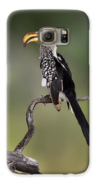 Southern Yellowbilled Hornbill Galaxy S6 Case by Johan Swanepoel