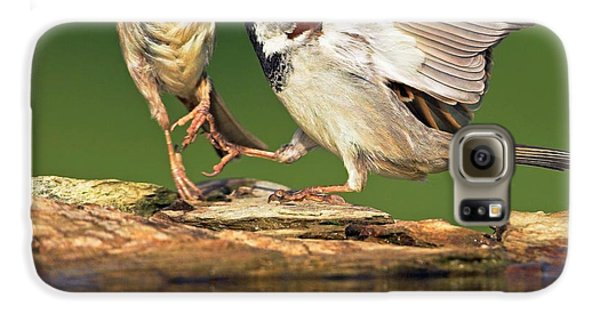 Sparrows Fighting Galaxy S6 Case by Bildagentur-online/mcphoto-schaef