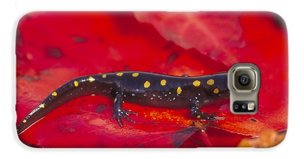 Spotted Salamander Galaxy S6 Case